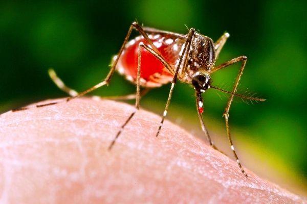 Vaccin contre la dengue