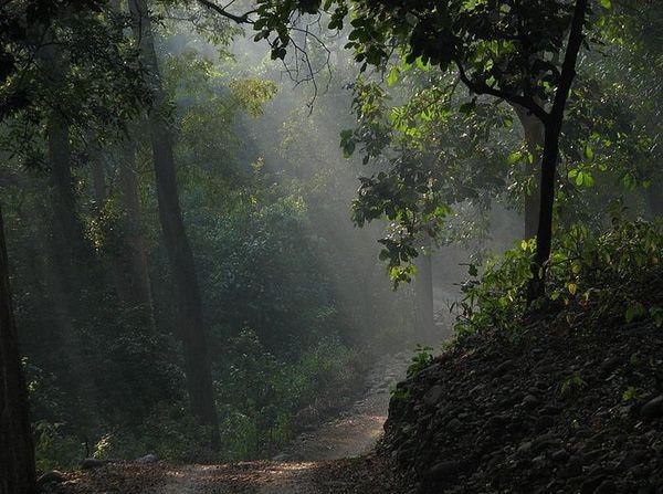 Forêt du Parc national Jim Corbett