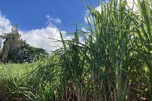 La Réunion touchée par la sécheresse en 2020.