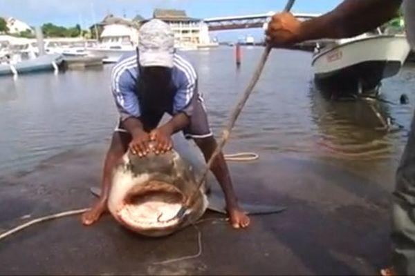 20150425 Requin
