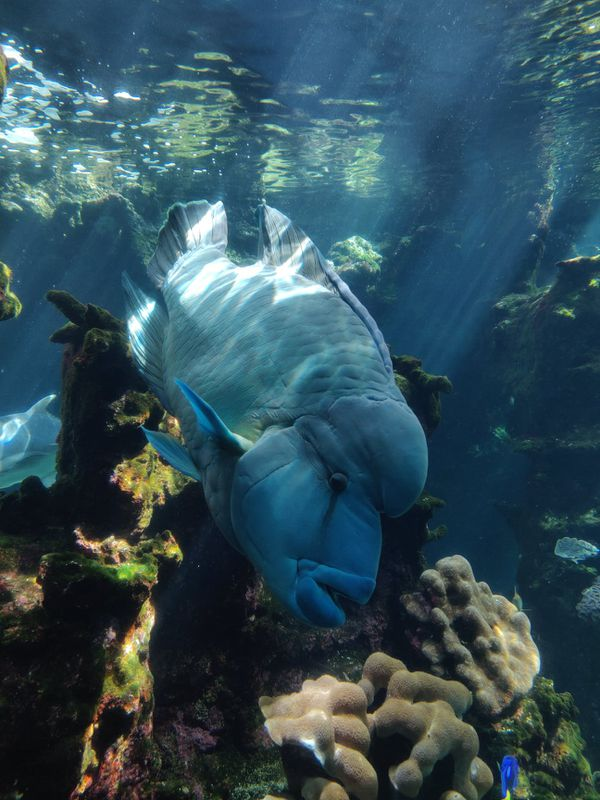 Adieu Léon, star de l'aquarium