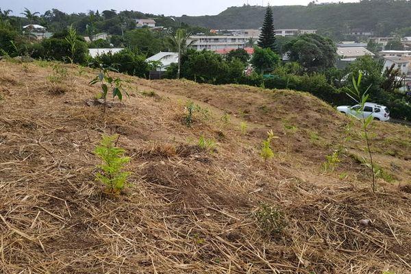Annonce de micro forêt urbaine, 3 juillet 2021, Vallée-des-Colons