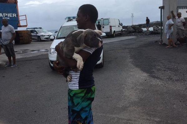 Naufragé et son chien 1