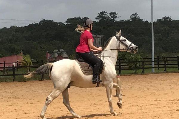 Originaire des Etats-Unis, l'équitation western, avant d'être une discipline sportive, est d'abord, dans les ranchs, une équitation de travail qui consistait à la base au convoyage et au tri du bétail.