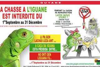 Interdiction de chasse à l'iguane