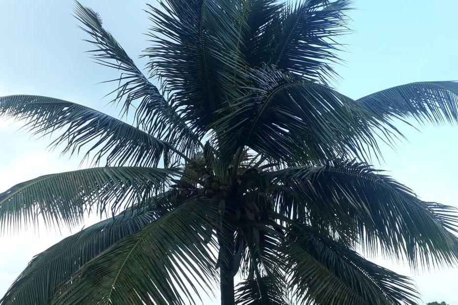 Météo : retour au vert plus tôt qu'initialement prévu - Guadeloupe la 1ère - Outre-mer la 1ère