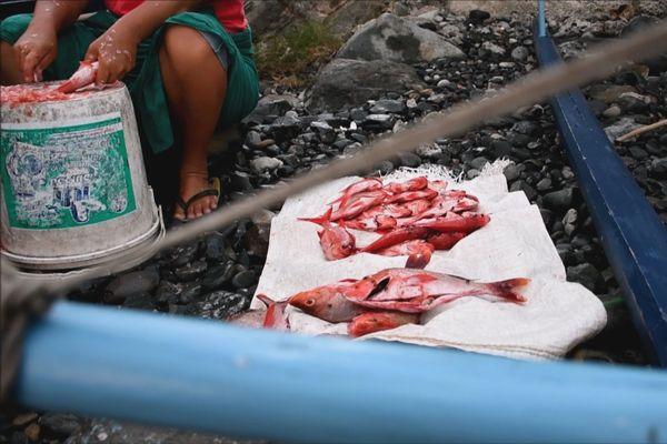 poisson / pêche Ua Pou