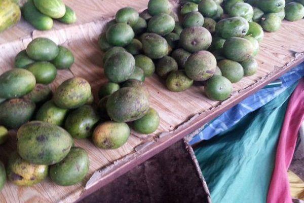 mangues de Mayotte