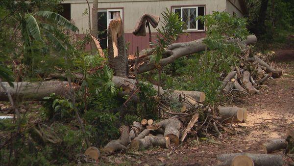Après Oma, arbres coupés à Belep, 22 février