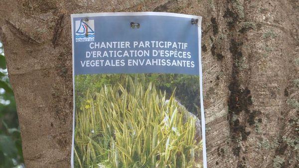 Plantes envahissantes, invasives