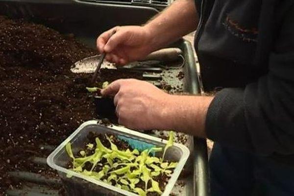 La saison du jardinage est ouvert à Saint-Pierre et Miquelon