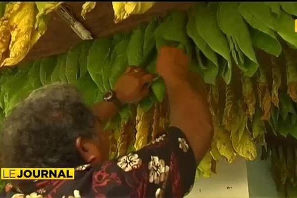 Du tabac à chiquer à Wallis et Futuna