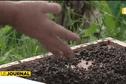 Un apiculteur accuse la démoustication de décimer ses ruches