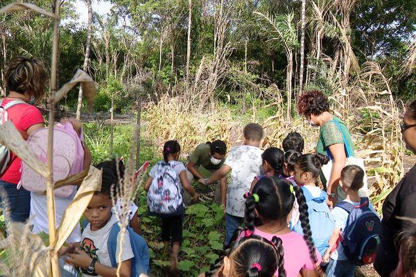Visite de l'abattis pédagogique d'Awala-Yalimapo
