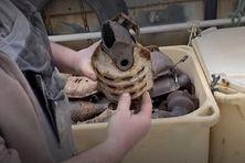 Le catalyseur de voiture contient trois minerais. En les envoyant à Terre-Neuve, ceux-ci seront récupérés pour être valorisés