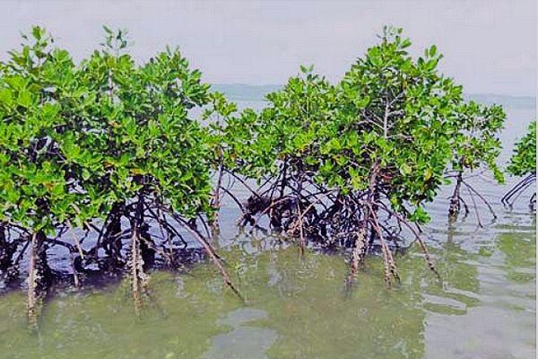 Mangrove le long de la côte Nord Est de Madagascar