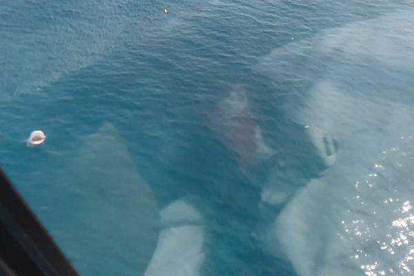 Requin helico