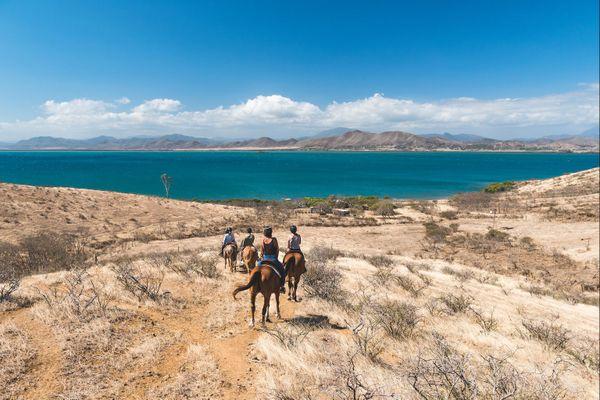 Livre Le Cheval en Nouvelle-Calédonie (ne pas utiliser autrement)
