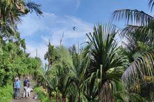 Le premier lâcher de moustiques mâles stériles par drone a eu lieu à La Réunion sur un site isolé de la commune de Saint-Joseph le 4 mai 2021.