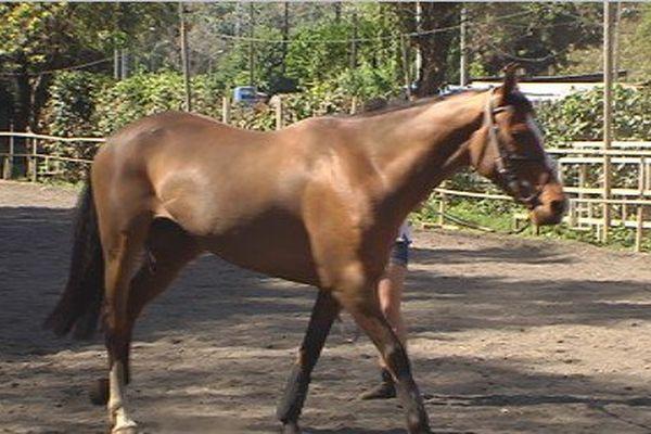 6 nouveaux chevaux au club équestre