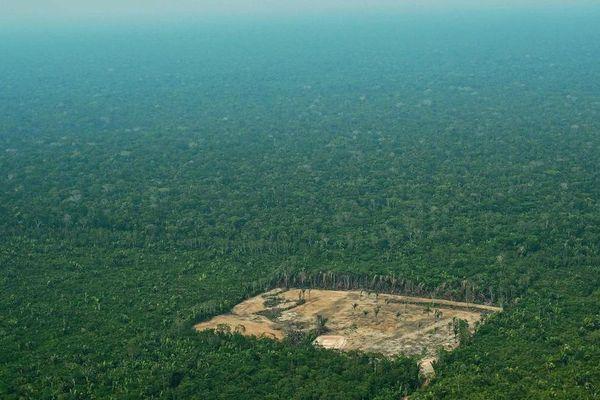 Déboisement en pleine forêt amazonienne
