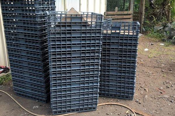 Un producteur se fait voler 500 kilos de mangues à La Possession