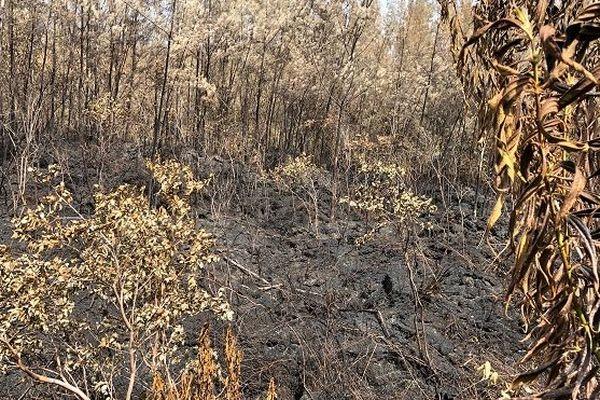 L'incendie du Grand-Brûlé est fixé, les pompiers restent mobilisés