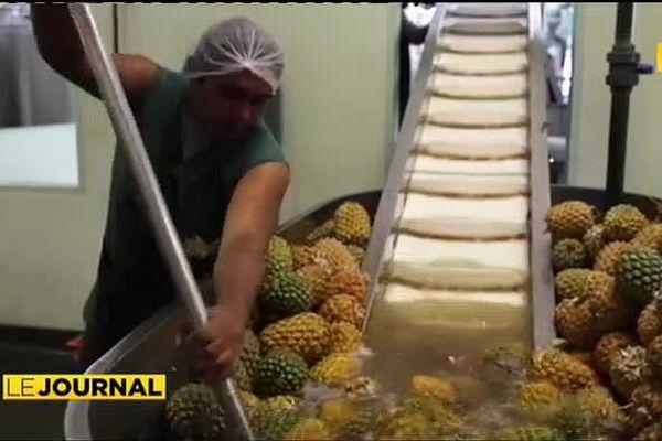 Pénurie d'ananas : une filière en alerte