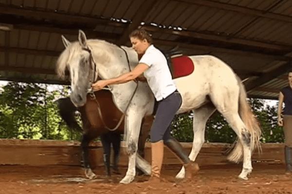 Dressage d'un cheval