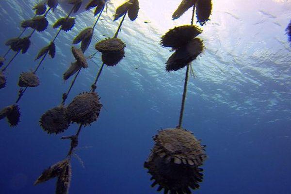 Polynésie, sauvons les perles