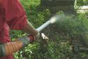 Lutter contre les fourmis de feu en respectant l'environnement