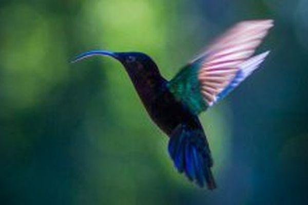 le jardin des colibris