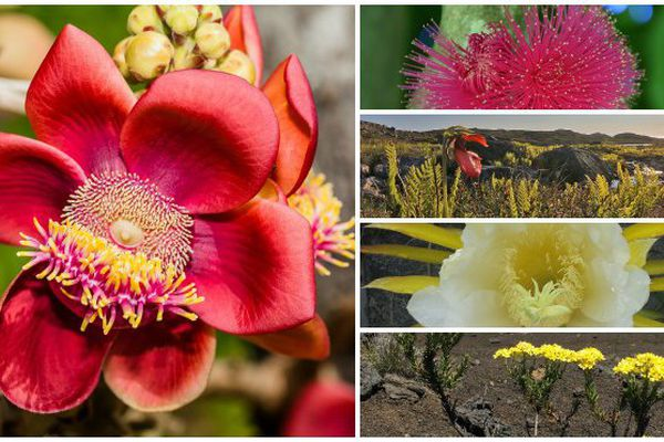 Les gagnants du concours de photos de fleurs