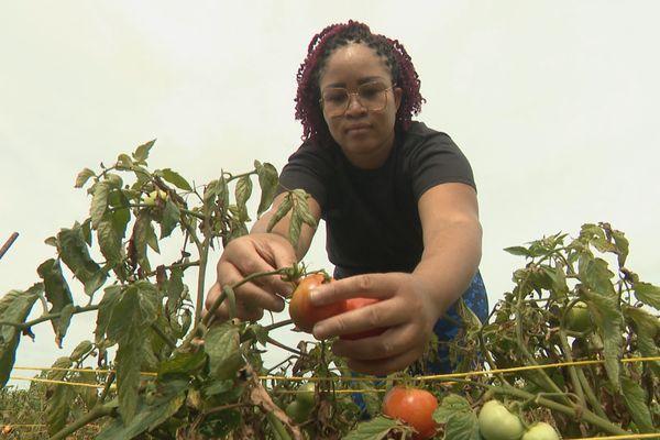 Cueilleurs de tomates Glaneurs Petit-Canal 30-04-2021