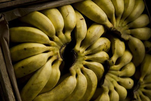 De la cocaïne dans des cartons de bananes