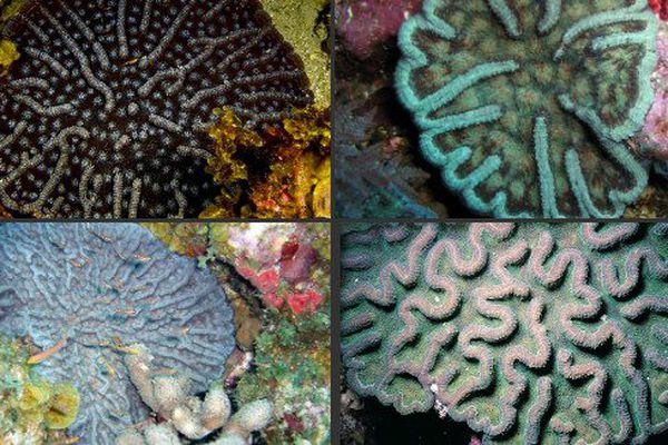 coraux 5