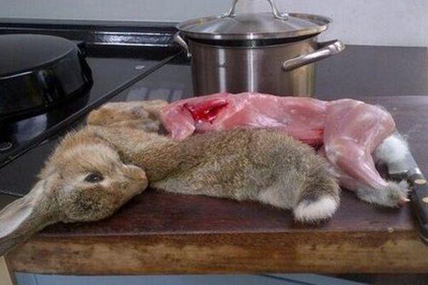 Après le chien, le coup du lapin