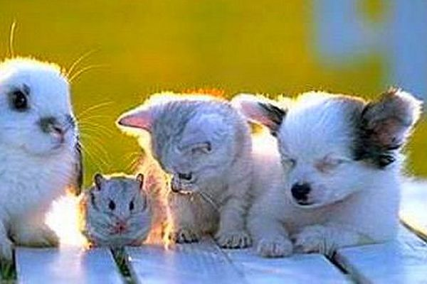 Chat, chien, souris, lapin