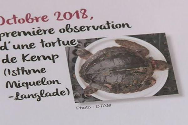 Une espèce de tortue jamais observée localement retrouvée échouée sur l'archipel