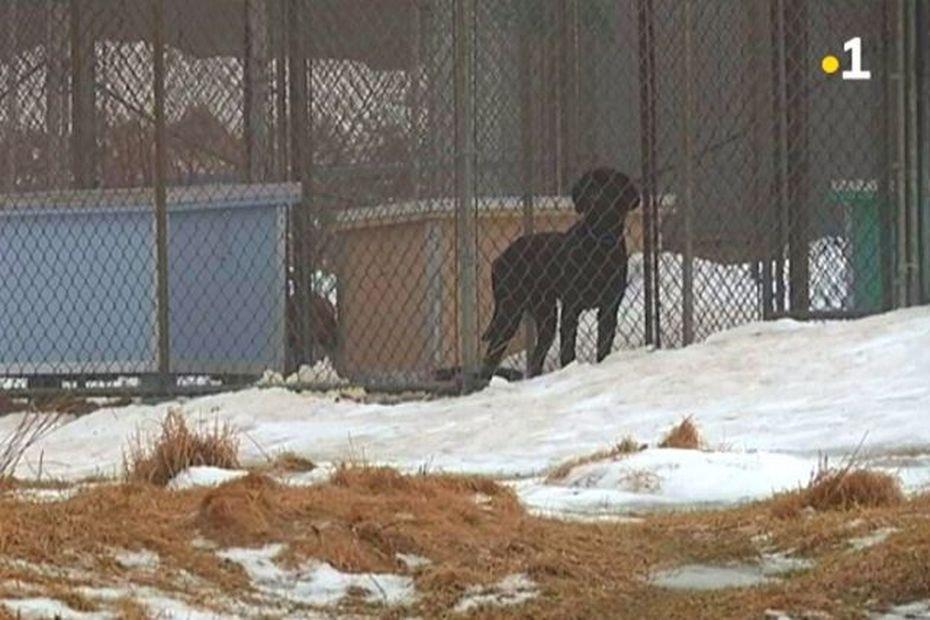 Une campagne de sensibilisation sur le bien-être des chiens en hiver - Saint-Pierre et Miquelon la 1ère