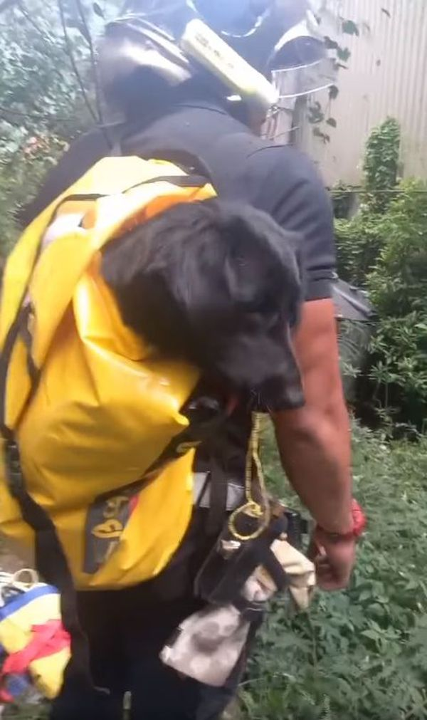 sauvetage chienne montagne