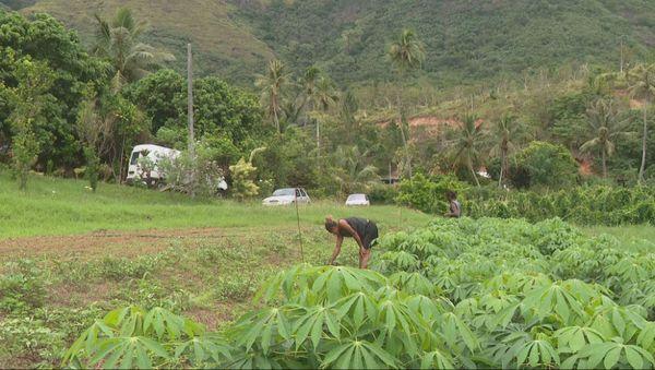 Houaïlou : agriculture