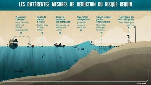 interdiction de baignade mesures contre le risque requin