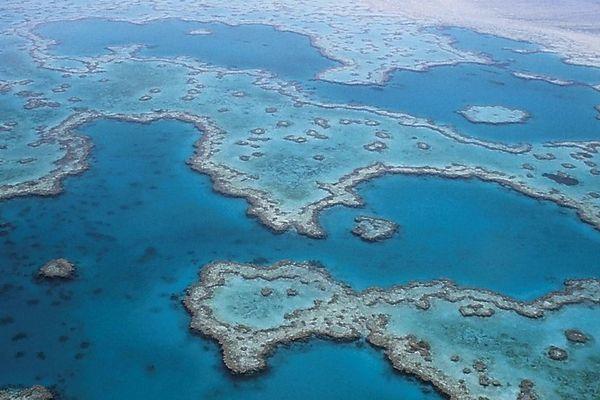 La grande barrière de corail en danger