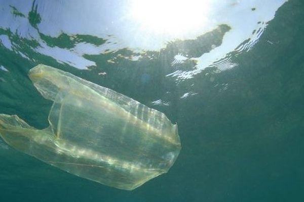 Sachet plastique dans l'eau