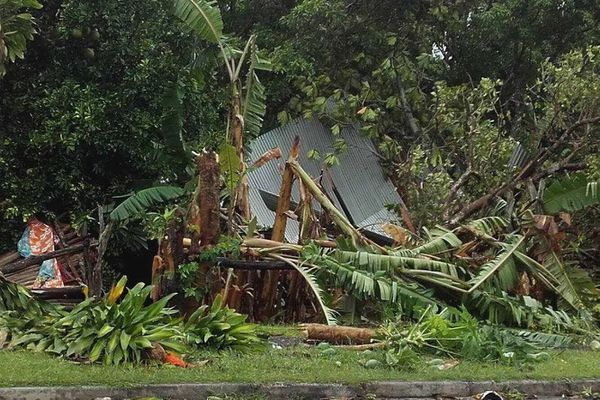Bananiers 2 Qanono cyclone Cook (10 avril 2017)