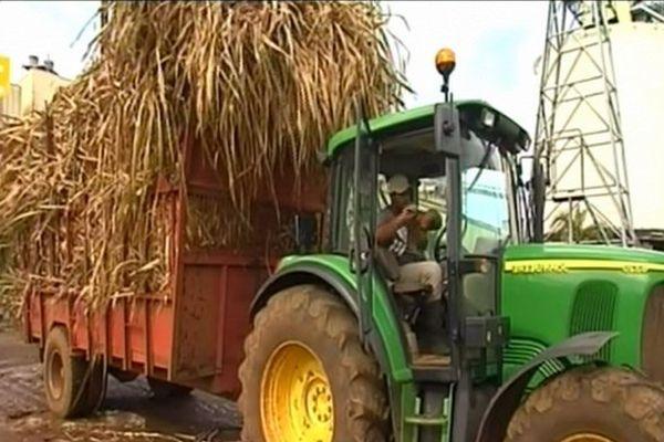 tracteur et cannes à sucre