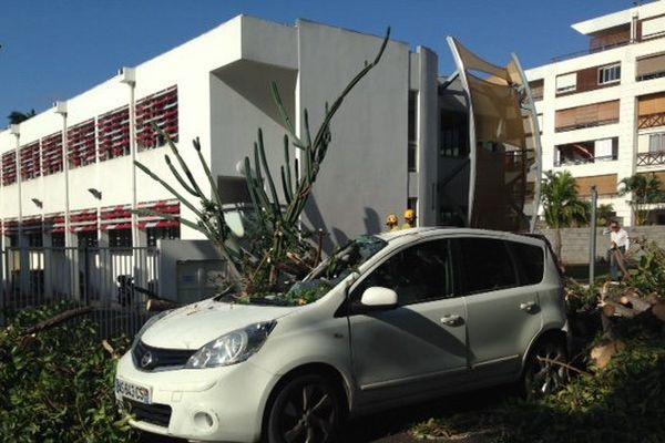 voitures endommagées par arbre...