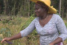 Colette Abé, agricultrice à Apatou