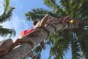Un Rarotongien sacré champion du monde de grimper au cocotier